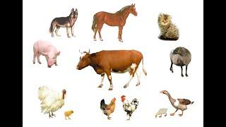 Звуки животных. Как говорят домашние животные для маленьких детей.Развивающее видео.Карточки Домана.