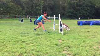 Gryffin agility training