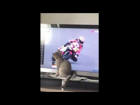 Funny Cat!! MotoGP :D