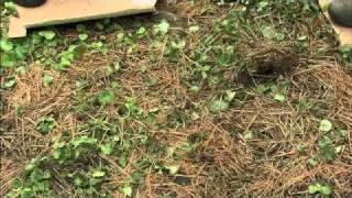 WPT The Wisconsin Gardener - Lasagna Gardening