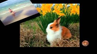 Esplode la primavera dedicato a Iga - Wybucha wiosna. Poświęcony Iga