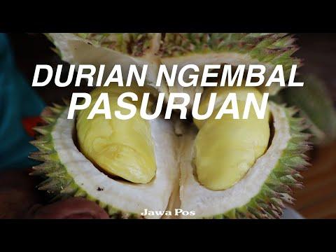 Jawa Pos Belah Durian Episode 19: Durian Ngembal Pasuruan