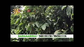 Kadamakolli Resort Coorg | Monsoon 2019 | Coorg water activity |Travel & leisure| Coorg Holidays.