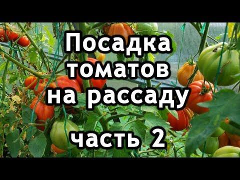Посадка помидоров на рассаду семенами. Как посадить томаты.
