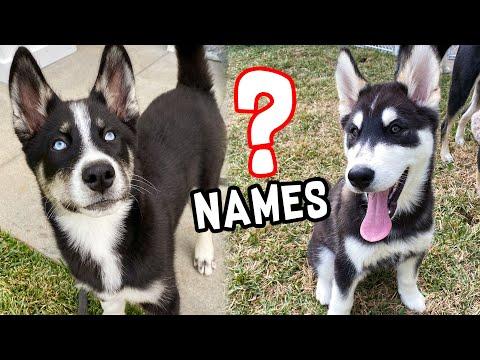 Picking Puppy Names!!