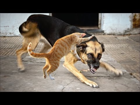 Top 10 Dog Breeds that Hates Cats
