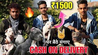 Cheapest Dogs Market in Delhi   Dogs In Cheap Price   Pitbull   American bully   German shepherd
