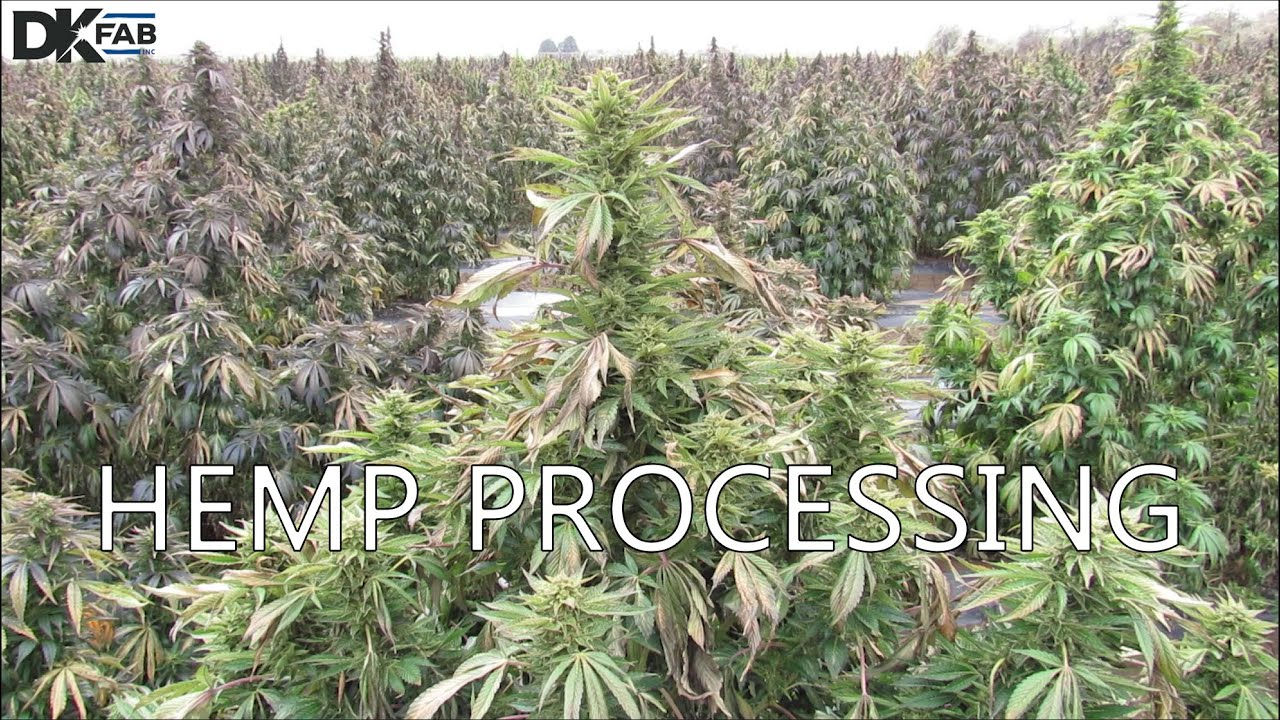 Hemp Processing- Farm to CBD Extraction