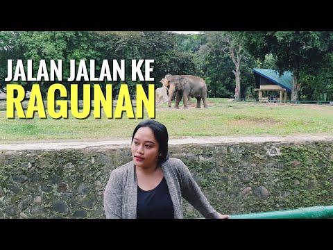 Jalan Jalan Ke Ragunan Zoo Jakarta 2019