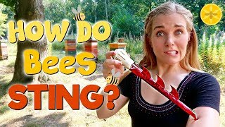 How Do Bees Sting? | Maddie Moate