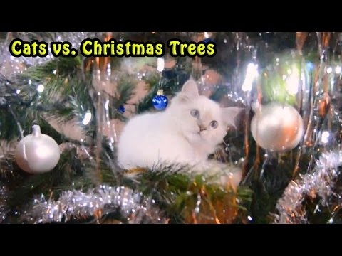 Cats vs. Christmas Trees Compilation 2016 - 2017 [NEW]
