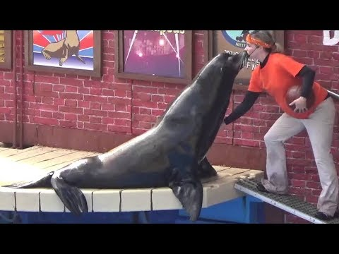 Amazing seal show at sea world in America