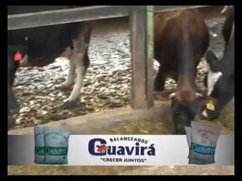 nutrición-en-vacas-lecheras