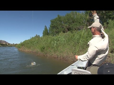 Fly Fishing Montana: Yellowstone River in Late June - Trailer for Full Show on Amazon Video Season 3