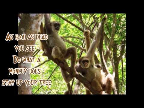 Big Eyed Fish ~ Dave Matthews Band With Lyrics OnScreen