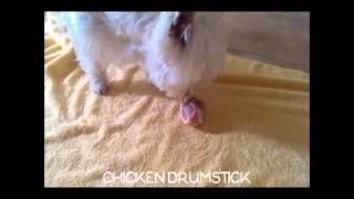 Our Westie Toto - Raw Diet (pork Knuckle And Chicken Drumstick)