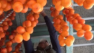冬景色に柿色の彩り 奈良・五條で「つるし柿」