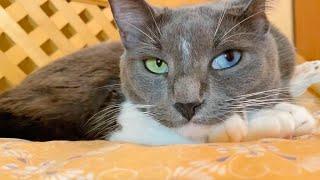 Rescue Cat Has Gorgeous Rare Eyes
