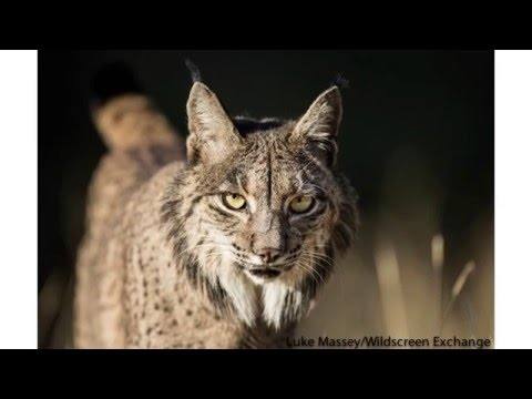 Empowering Conservation Organisations through Inspiring Visual Media - Wildscreen Exchange