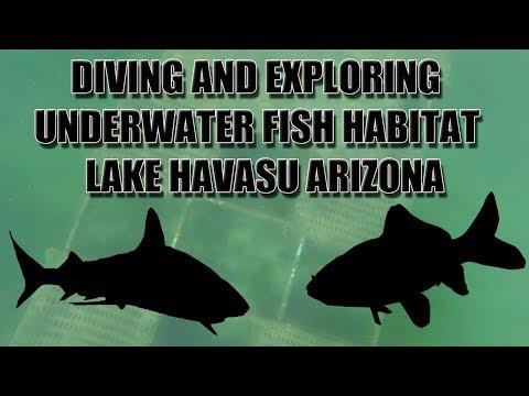 Underwater View Of Fish Habitats Diving Lake Havasu Arizona