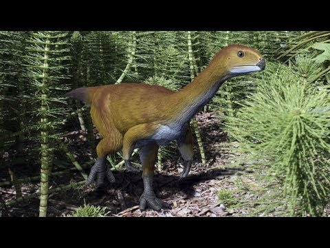 This strange looking creature: may be the missing link in the evolution of dinosaurs.