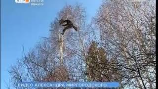 Скалолаз спас кота с дерева в Иркутском районе