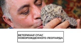 Спасение новорожденного леопарда