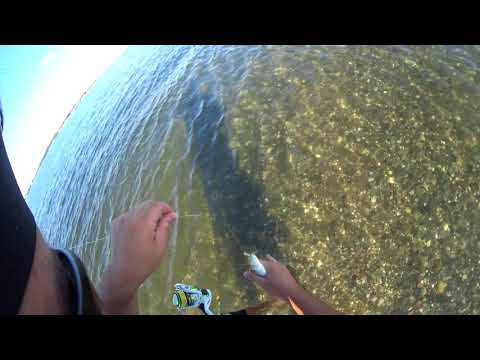 How To Catch Snapper Bluefish