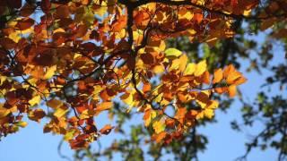 Antonio Vivaldi - The Four Seasons: Autumn