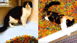 3 - й сезон знаменитые котики кошки !