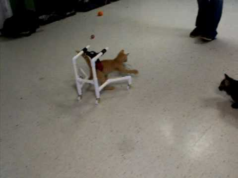 wheelchair for cats graco slim spaces high chair cat day 1 spectacular play youtube