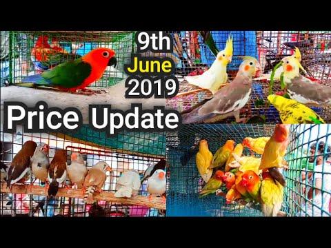 Kolkata Bird Market At Galiff Street Visit Price Update 9th June 2019