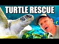 Everything about Sea Turtles  - Smarter Every Day 239