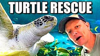 The Life of a Sea Turtle  - Smarter Every Day 239