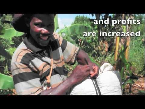 African Leafy Vegetables