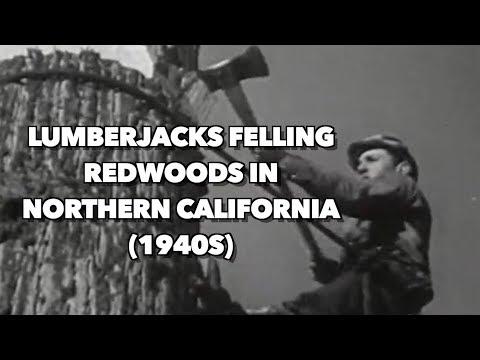 1940s Lumberjacks felling Redwoods in Northern California