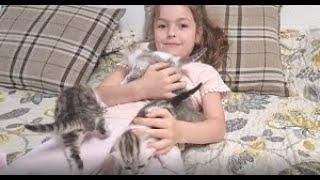 Маленькие котята это антистресс для Ребенка  😇 Ребенок играет а котята изучают территорию
