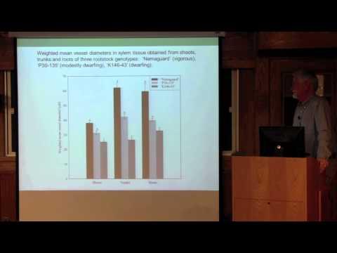 Peach tree scion vigor linked to rootstock xylem anatomy