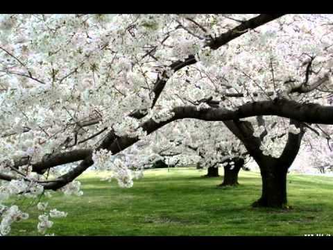 Завтра Весна - Loop- Когда-то играл в этом коллективе,за что благодарен Динису Цивилеву, Михаилу Глебову, и  остальным участникам,классные ребята,творческий подход к написанию музаки,от сердца пишут.Запись с концерта Кстл РОк Клаб.Только недавно нашел,год