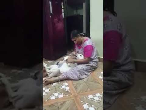Indian women feeding dog 2018 thumbnail