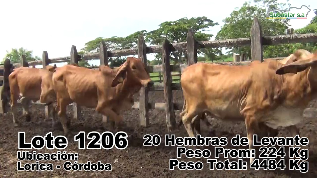 LOTE 1206
