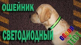 Навигатор ошейник; Почта Печкина; светящийся ошейник для собак