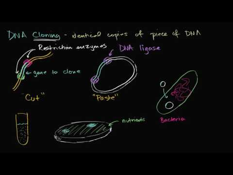 DNA cloning and recombinant DNA | Biomolecules | MCAT | Khan