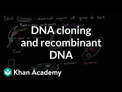 DNA cloning and recombinant DNA | Biomolecules | MCAT | Khan Academy