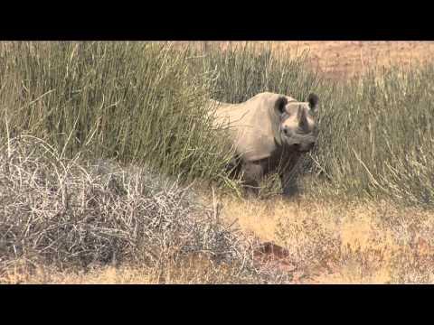 Frans Lanting Tracks Rhinos in Namibia