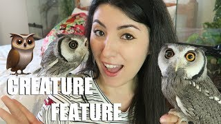 White Faced Scops Owl   Transforming Owl   Creature Feature thumbnail