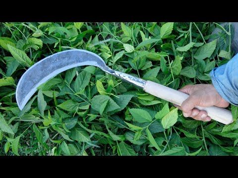 HOW TO MAKE A SICKLE INDONESIAN STYLE FROM SPRING STEEL ( HOMEMADE SICKLE )