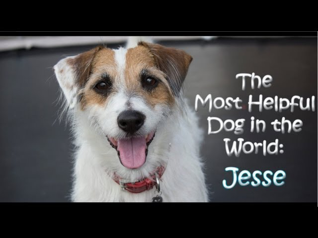 The Most Helpful Dog in the World: Jesse