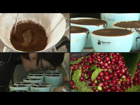 Geisha coffee, the world's most expensive bean from Panama | AFP