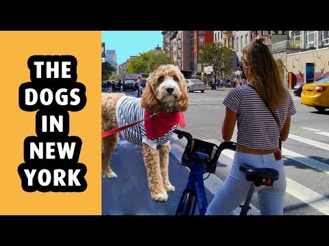 The Dogs In New York City - Halloween